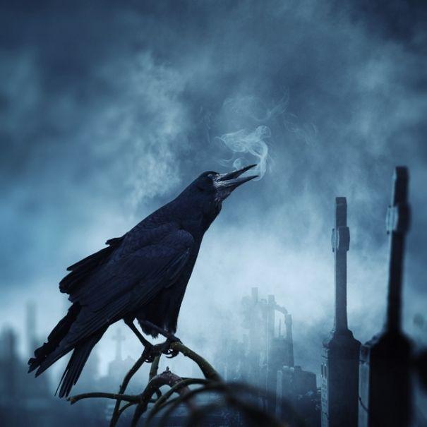 ВОРОН: предвестник смерти