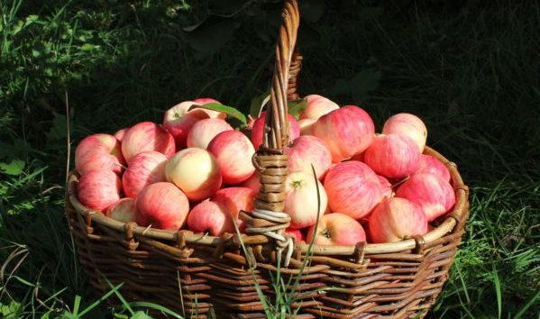 ПРИТЧА: о лукошке с фруктами