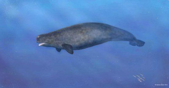 РАСКОПКИ: обнаружено богатое захоронение кита