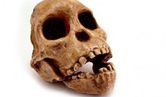 КАННИБАЛИЗМ: первые британцы были людоедами