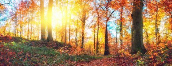 Лесные чудища