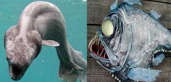 Морской монстр